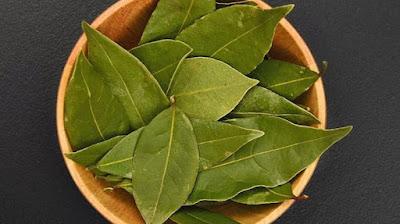 cara mengolah daun salam