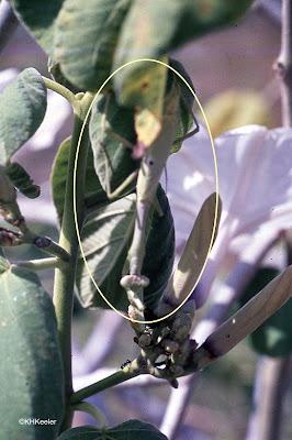 camouflaged preying mantis