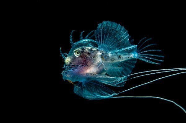 The Best Underwater Photos EVER Taken Show Life From A Different Angle. - 'Planktonic Predator' by George Stoyle (UK)