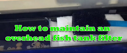 How to maintain an overhead fish tank filter