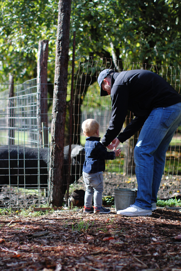 Feeding a pig on a farm