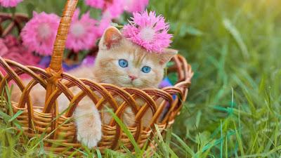 صورة قط,اجمل قطه,صور بزونه2020,قطط روعة  ,بزازين جميلة,صور قطط حلوه,اجمل القطط في العالم ,احلى قطط2020 ,