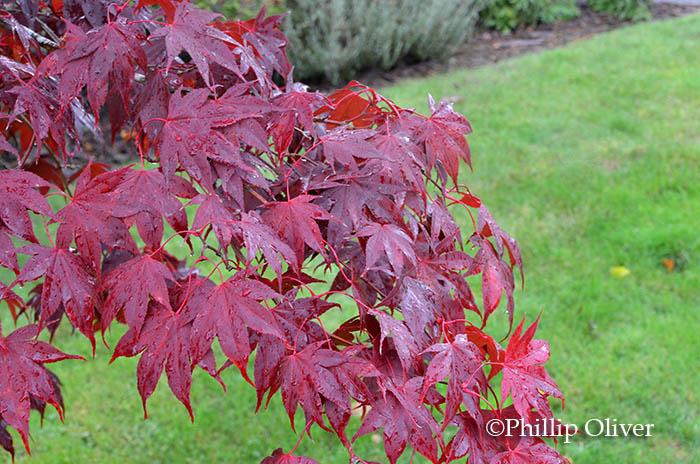 Fiery Fall Colors