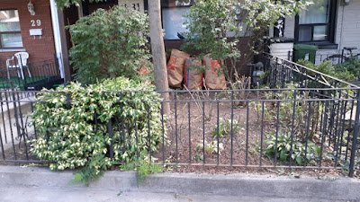Beaconsfield Village Toronto front yard summer garden cleanup after by Paul Jung Gardening Services--a Toronto Organic Gardening Company