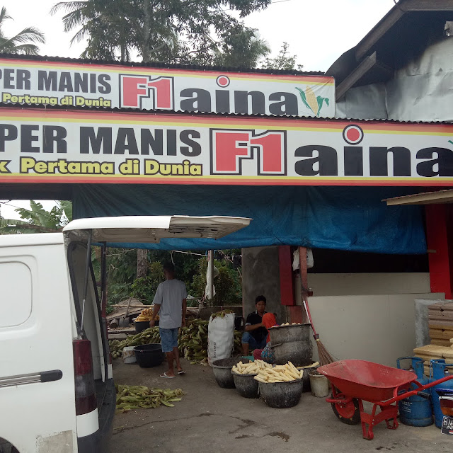 Jagung Super Manis Payakumbuh