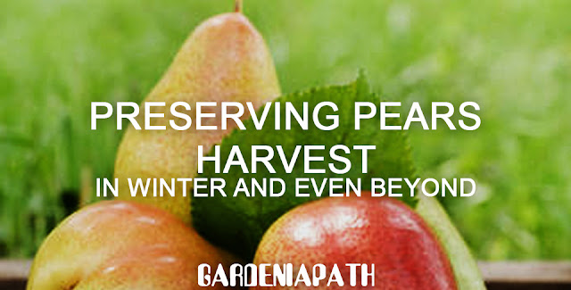 Preserving Pears Harvest In Winter And Even Beyond
