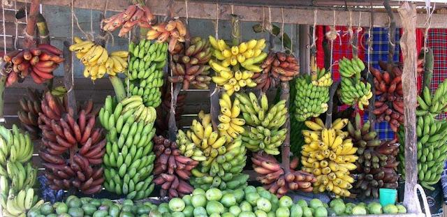 Виды-бананов-фото