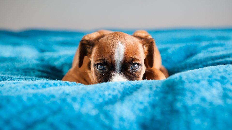 εκπαιδευση σκυλου να μη φοβαται στη βολτα