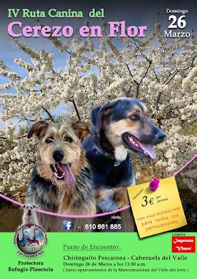 IV Ruta Canina del Cerezo en Flor