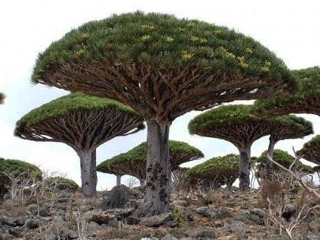 Menakjubkan, Inilah 5 Bentuk Pohon Terunik di Dunia
