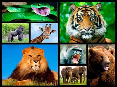 Proyecto Diccionario de animales
