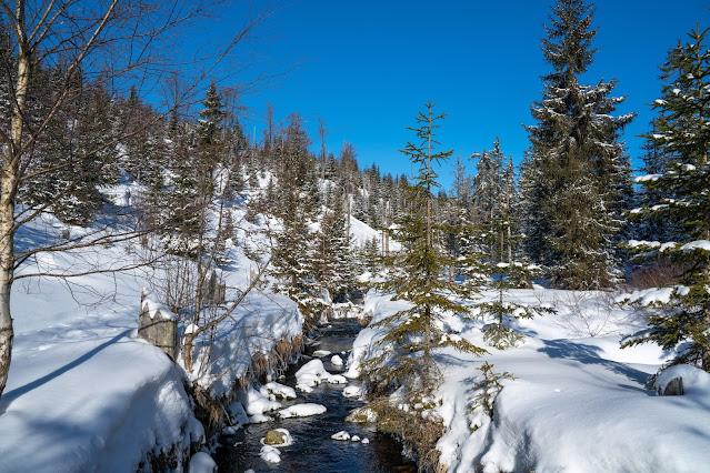 Winterwandern Mauth-Finsterau  Reschbachklause – Siebensteinkopf  Nationalpark Bayerischer Wald 06