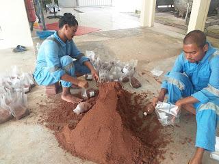 Start Ganoderma Mushroom Farm