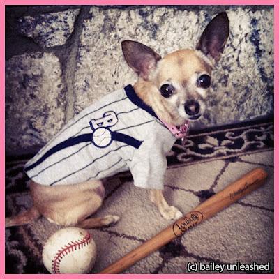 baseball chihuahua via baileyunleashed.com