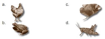 Soal UAS IPA Kelas 3 SD Semester 1