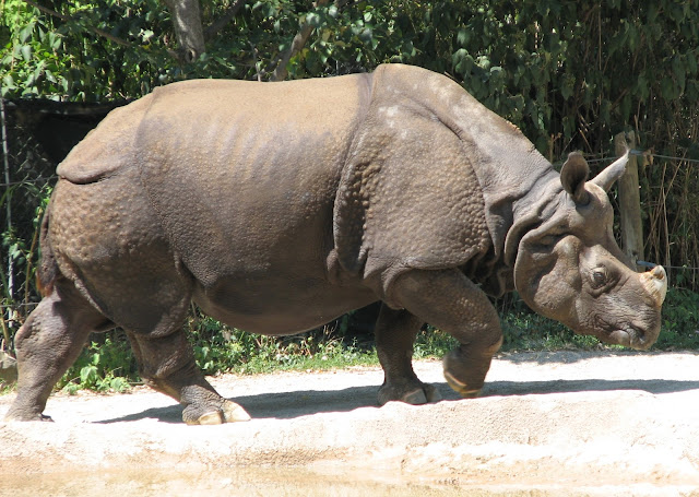 5 rare animals you will probably never see in the zoo