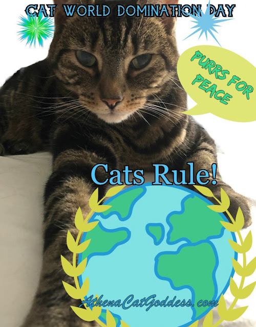 Tabby cat holding globe graphic