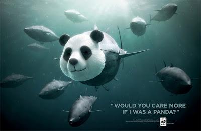 Campaña contra la pesca indiscriminada del atún.