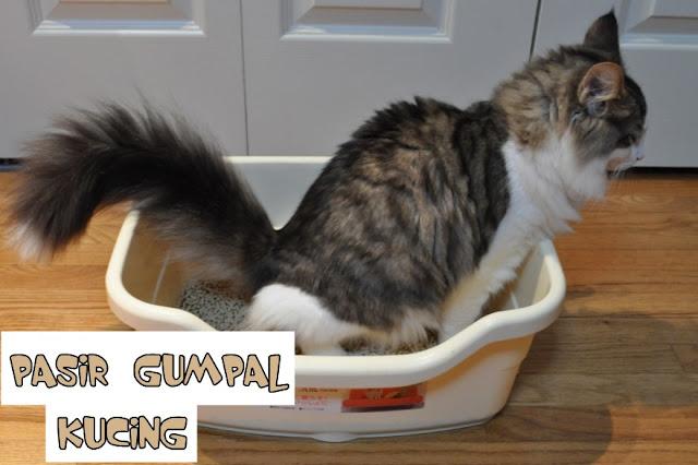 Pasir Gumpal untuk Kucing