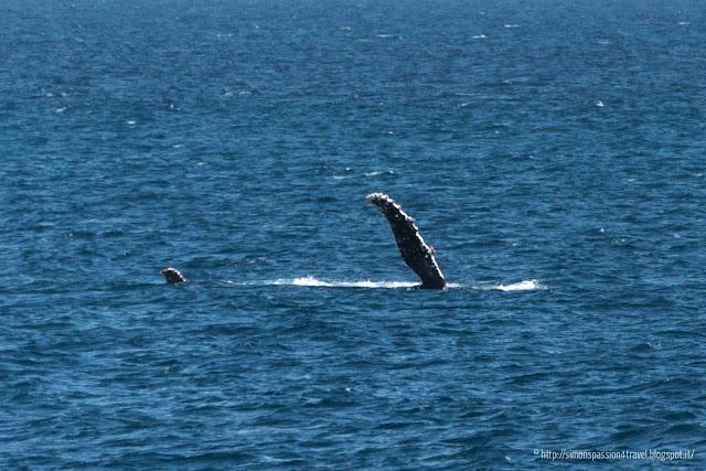balena