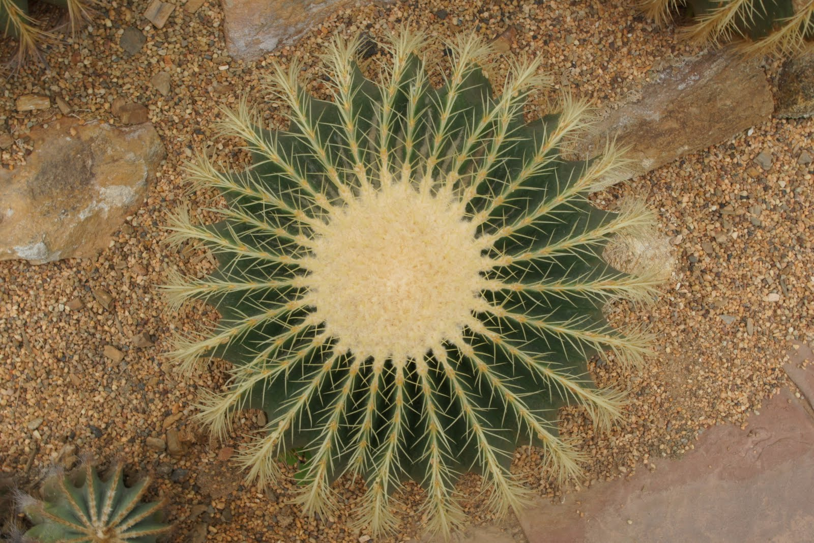 Symmetrical Nature Pictures Daily Pictures