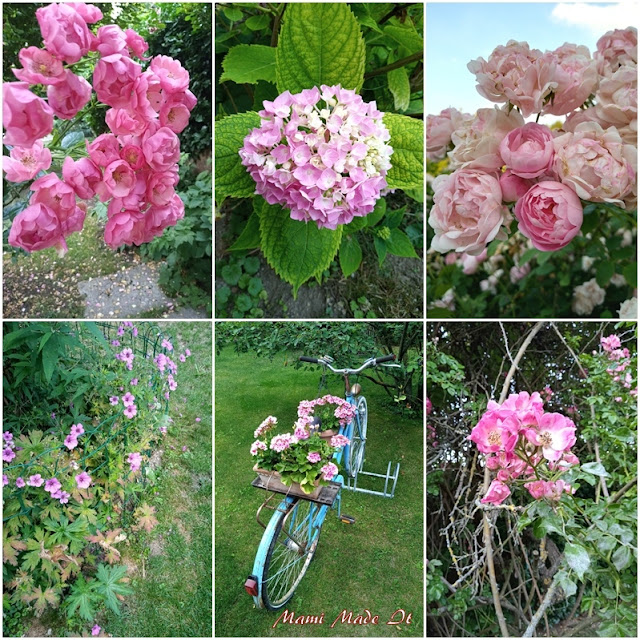 Rosa Blüten im Juni - Pink blossoms in June