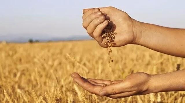 Miért árthat a bőrnek a gabonafogyasztás?