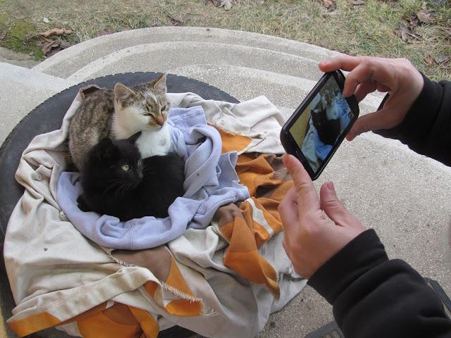 Többszemélyes macska fekhely gumiabroncsból