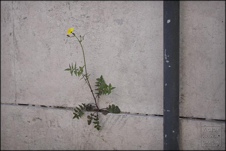 fotografia,naturaleza,flor,planta,muro,valencia,serie