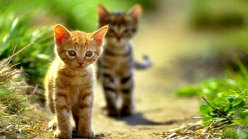 Cute Cat HD Pictures for Whatsapp & Facebook