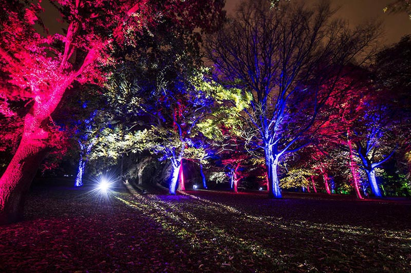 11 things to do in Edinburgh at Christmas and New Year