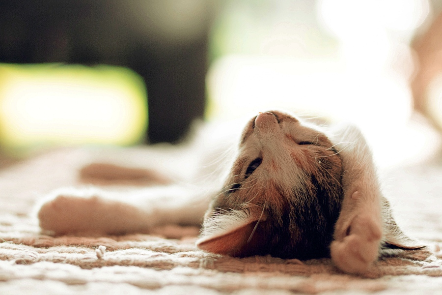 Homeopatia animal: conheça todos os benefícios para o seu amor de quatro patas!