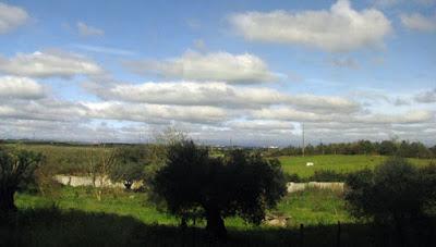 paisagem de campo e oliveira