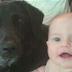La niñera golpea al bebé frente al perro de la familia. ¡La reacción del canino es increíble!