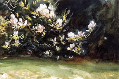 bloeiende magnolia t Witte Voorhuus, gastenkamer, b&b, overnachting te Zelhem