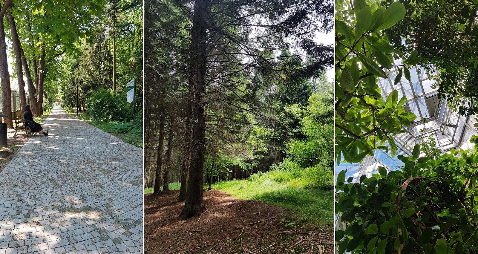 zielone tereny w mieście
