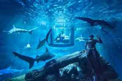 Underwater Shark Tank Paris