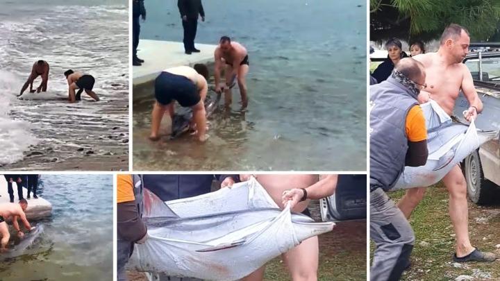 Συγκινητική επιχείρηση διάσωσης δελφινιού σε παραλία του δήμου Παγγαίου