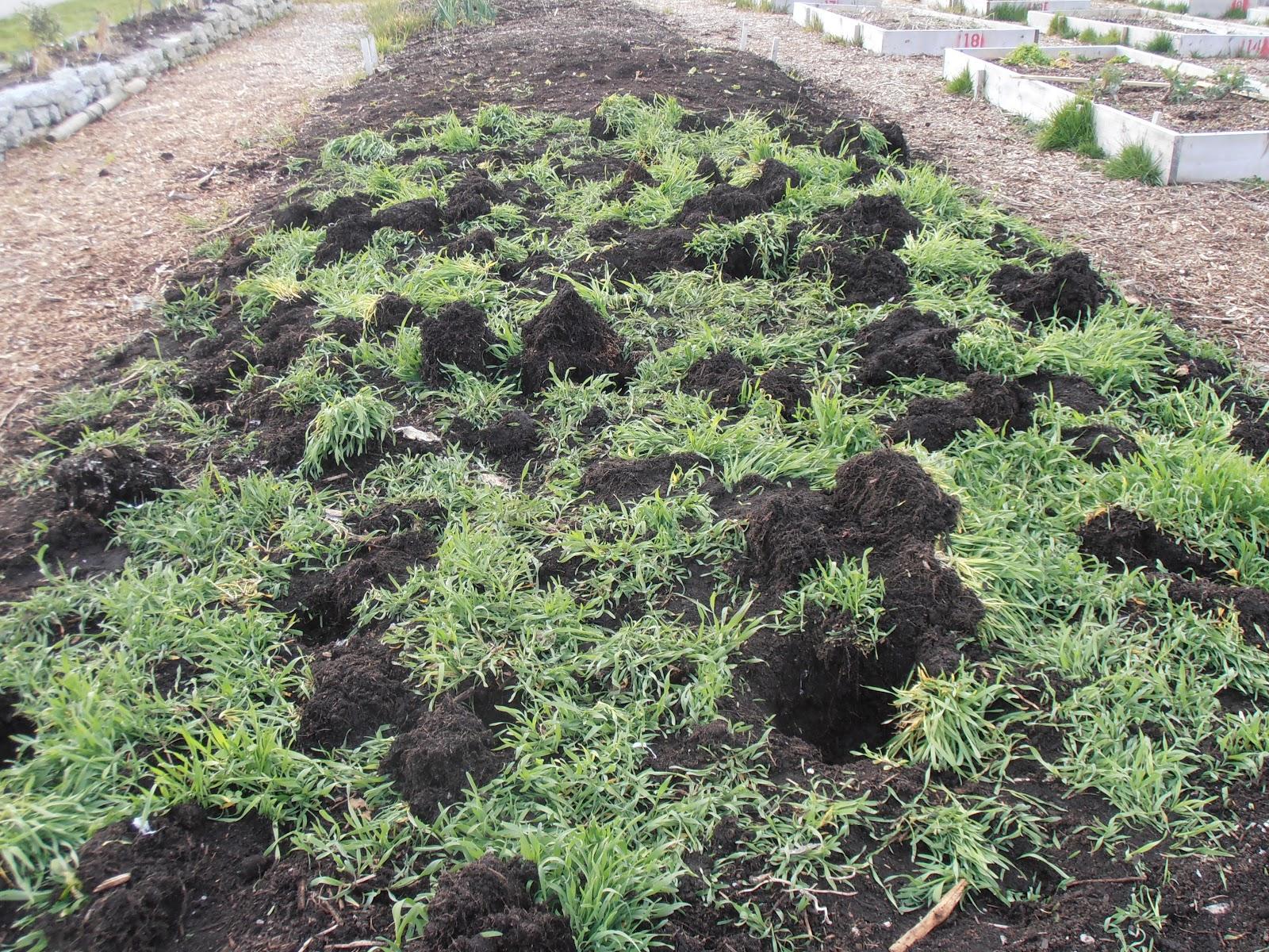 Ladner Community Garden Planting The School Garden In March