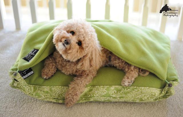 Bungee Burrow Beds - A Pet Bed System - Kansas City Dog ...