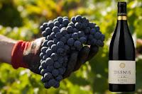 vinos tilenus