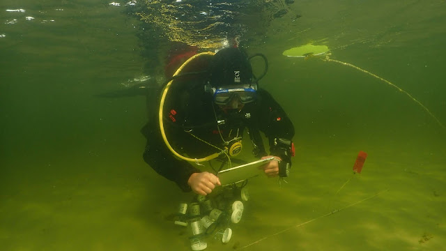 Sukeltaja veden alla