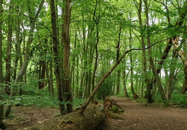 Gobions Wood - image courtesy of HMWT
