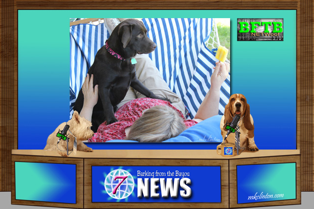 BFTB NETWoof News reports on most popular dog in the USA