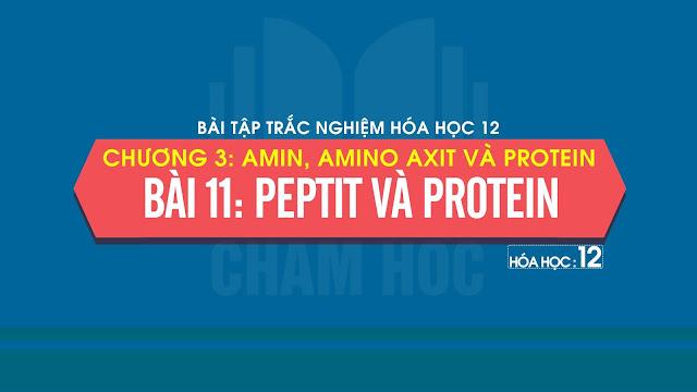 Bài tập trắc nghiệm Hóa 12 Bài 11: Peptit và protein