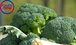 Benefits of Broccoli for our Health