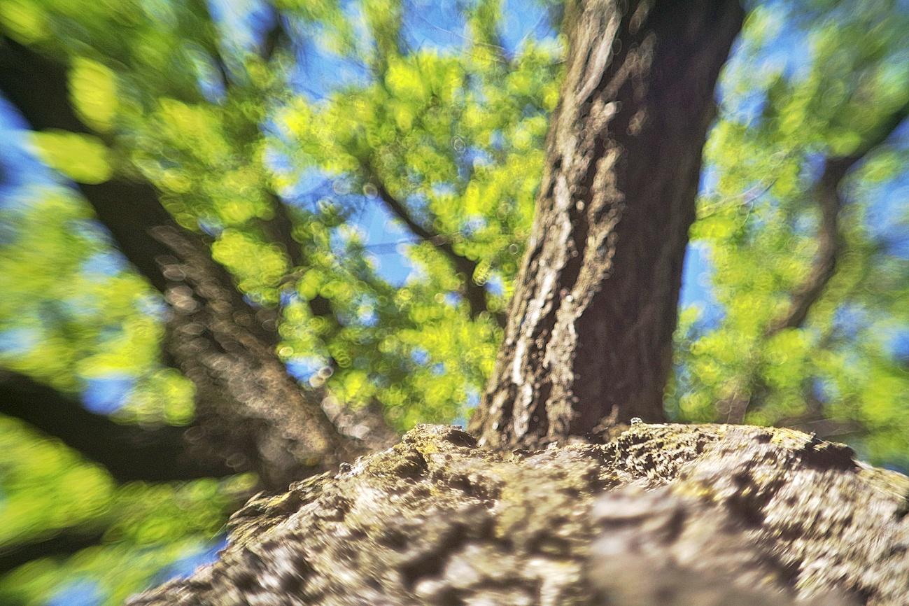 Zum Tagesabschluss — Bild des Tages #95 — Baumstammblick #2