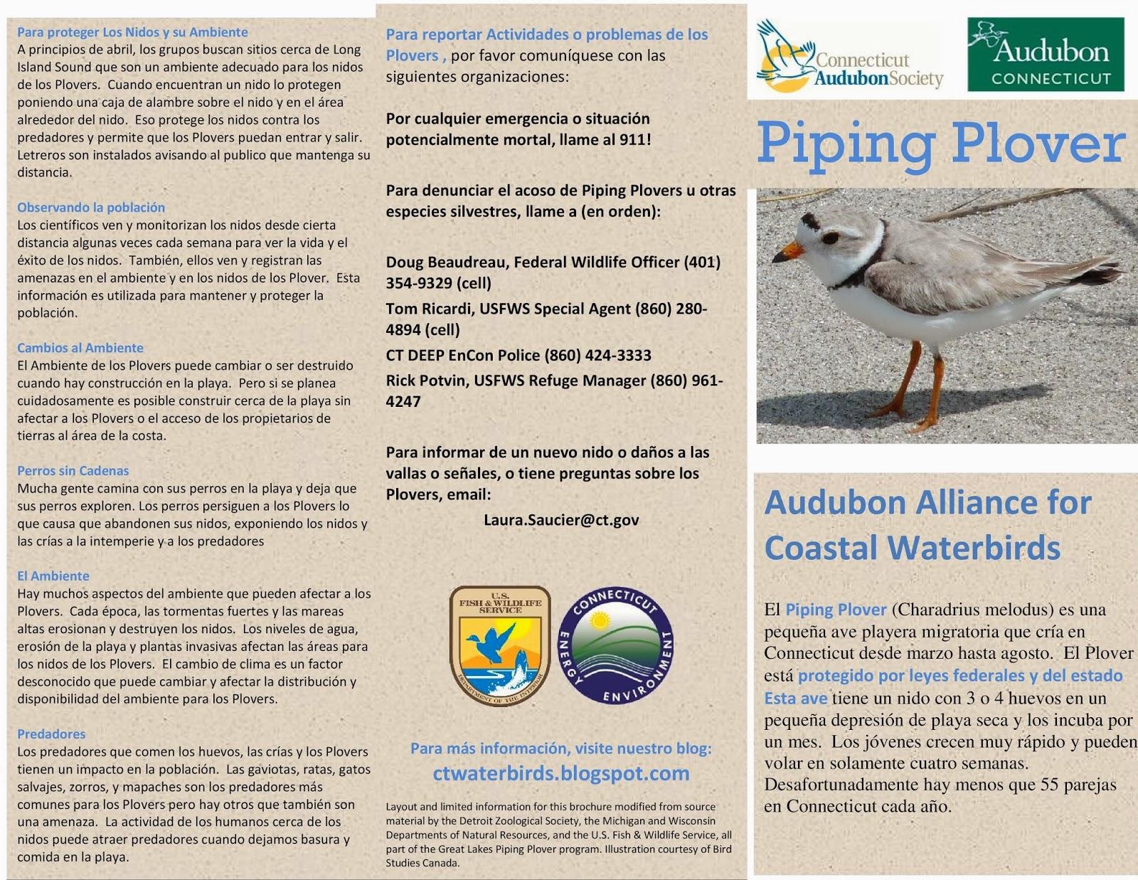 Audubon Alliance for Coastal Waterbirds: Piping Plover