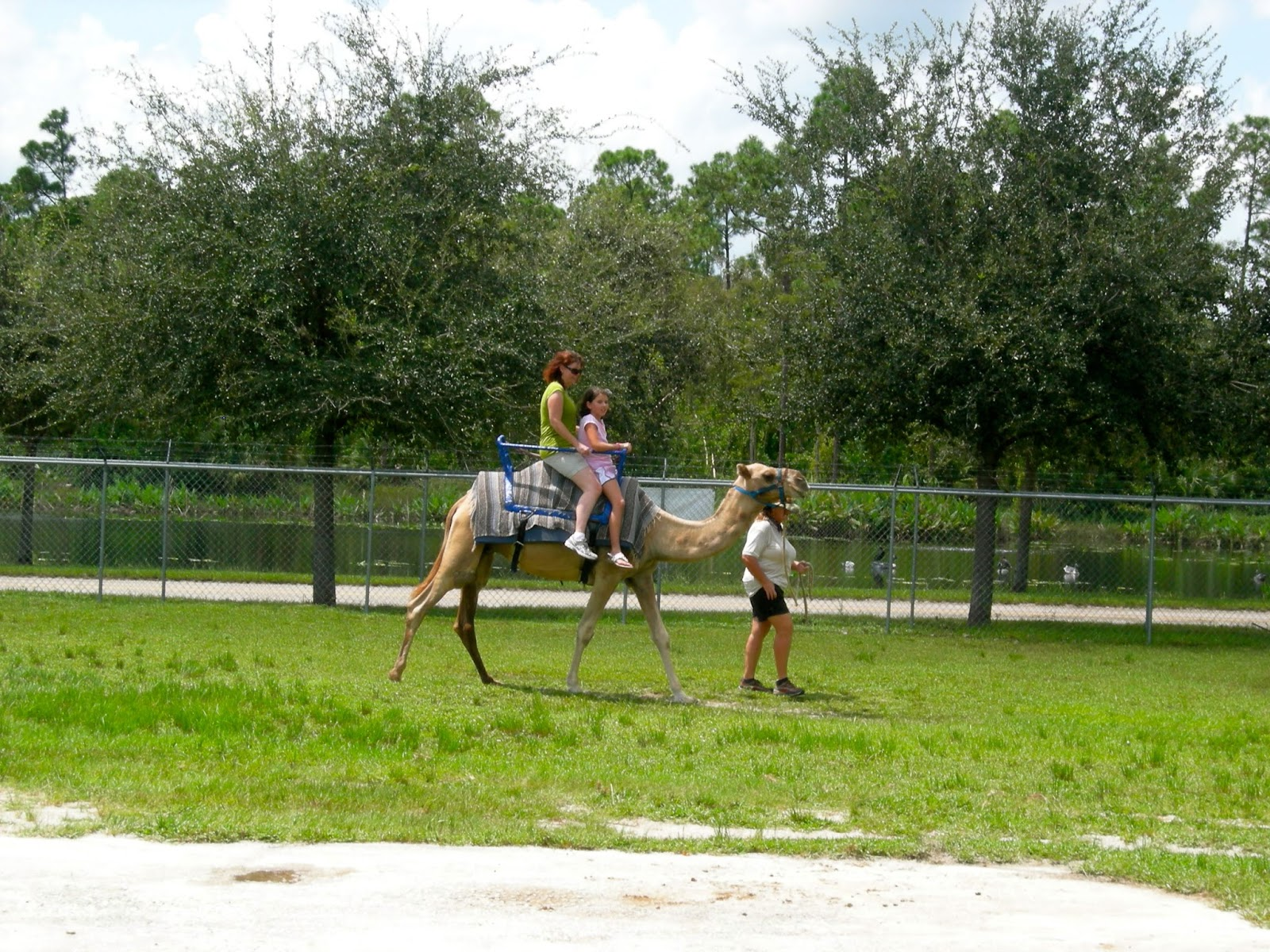 Camel Ride at Lion Country Safari, Loxahatchee, FL - ouroutdoortravels.blogspot.com