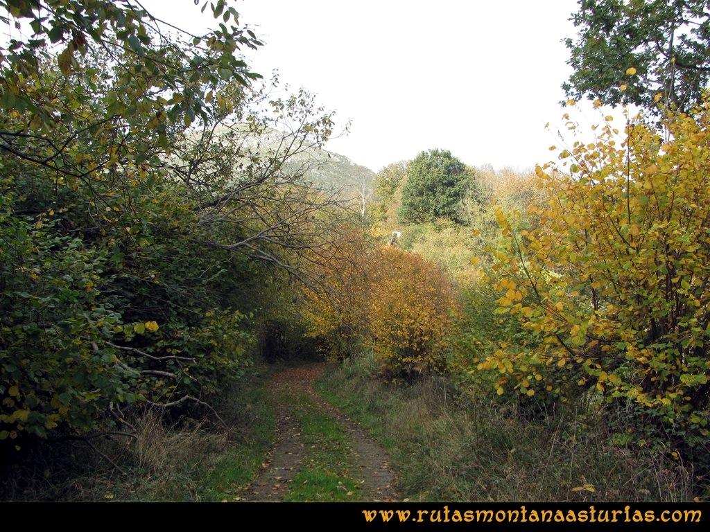 Ruta Baiña, Magarrón, Bustiello, Castiello. Bosque
